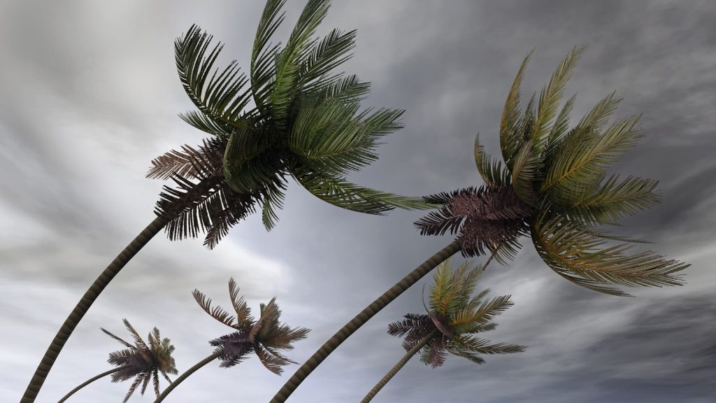 bigstock-palms-at-hurricane-12116309-1024x576